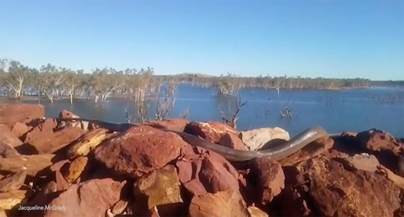 Western Australia mum finds huge python snake sunbaking at Pilbara dam in Newman.