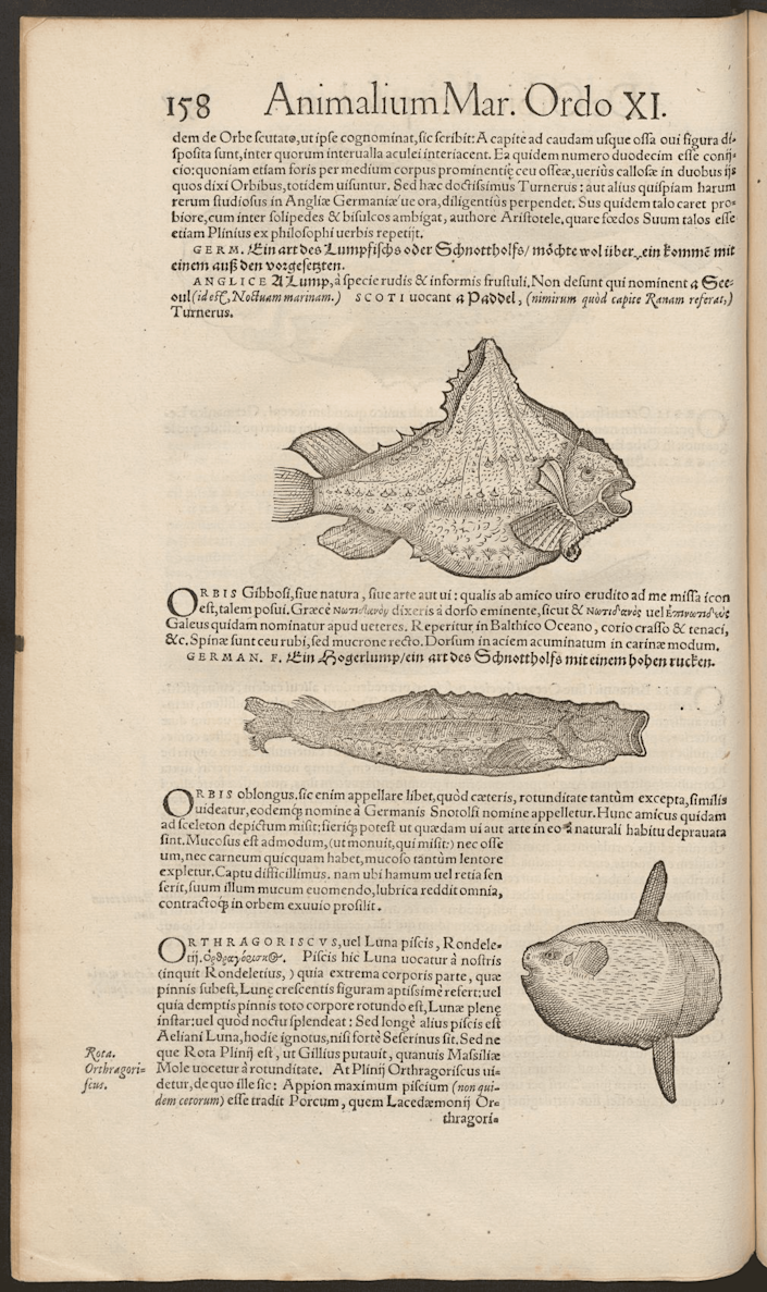 """Icones animalium"" includes an image and description of sunfish on page 158."