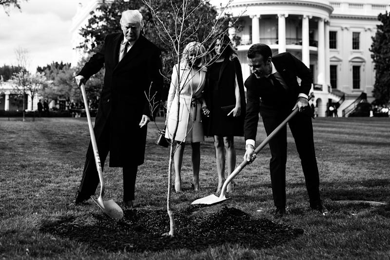 White House tree planted by Trump, Macron vanishes