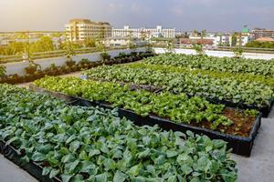 Developing a strong and sustainable business - a challenge for many urban farmers - will be at the center of a new applied research project led by Seneca.