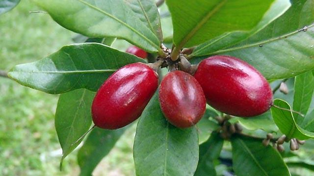Miracle Berry Diet: Could Plan Hold Key to Weight Loss?