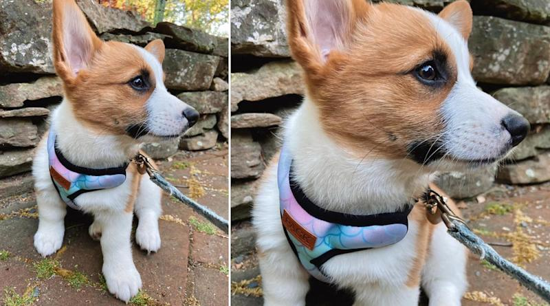 Pack Leashes: Disrupting the Pet Industry While Giving Back