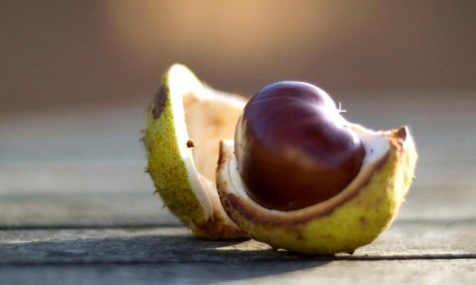 Conkers … contain natural detergent.