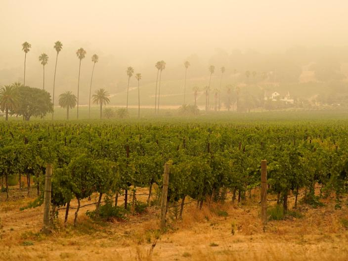 Smoke and haze from wildfires hovers over a vineyard in Sonoma, California earlier this month (AP)