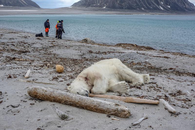 Polar bear shot dead after attacking cruise line guard