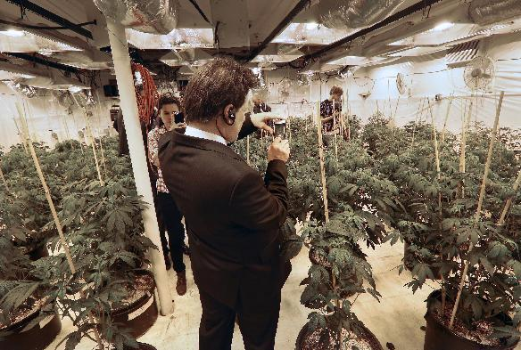 FILE -This Oct. 23, 2013 file photo shows Mexican lawmaker Fernando Belaunzaran taking a photo with his phone while touring a legal marijuana grow room, at River Rock dispensary, in Denver. Several foreign lawmakers pushing for drug law reforms at home took a close up look the evolving legal marijuana industry in Colorado. From the Americas to Europe to North Africa and beyond, the marijuana legalization movement has unprecedented traction, a nod to successful efforts in Colorado, Washington and the small South American nation of Uruguay, which in December became the first country to approve nationwide pot legalization. (AP Photo/Brennan Linsley, File)