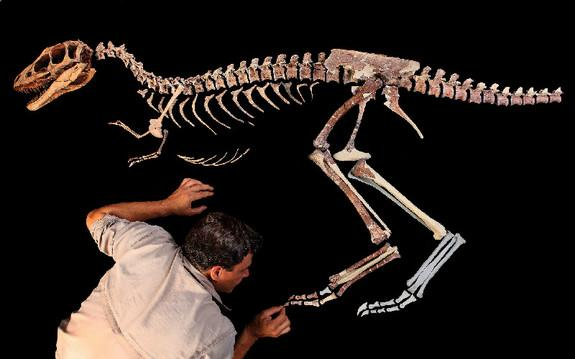 University of Chicago paleontologist Paul Sereno adds the toe claw to the skeleton of a tyrannosaur he called <em>Raptorex</em>. Other paleontologists do not agree these fossils belong to a new species.