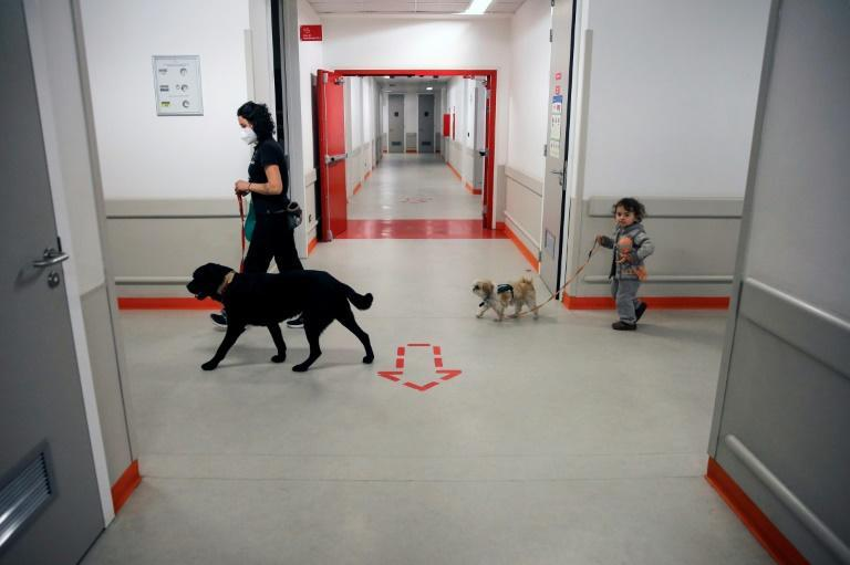 The dogs also help health professionals deal with the stress and exhaustion brought about by month after month of coronavirus duty