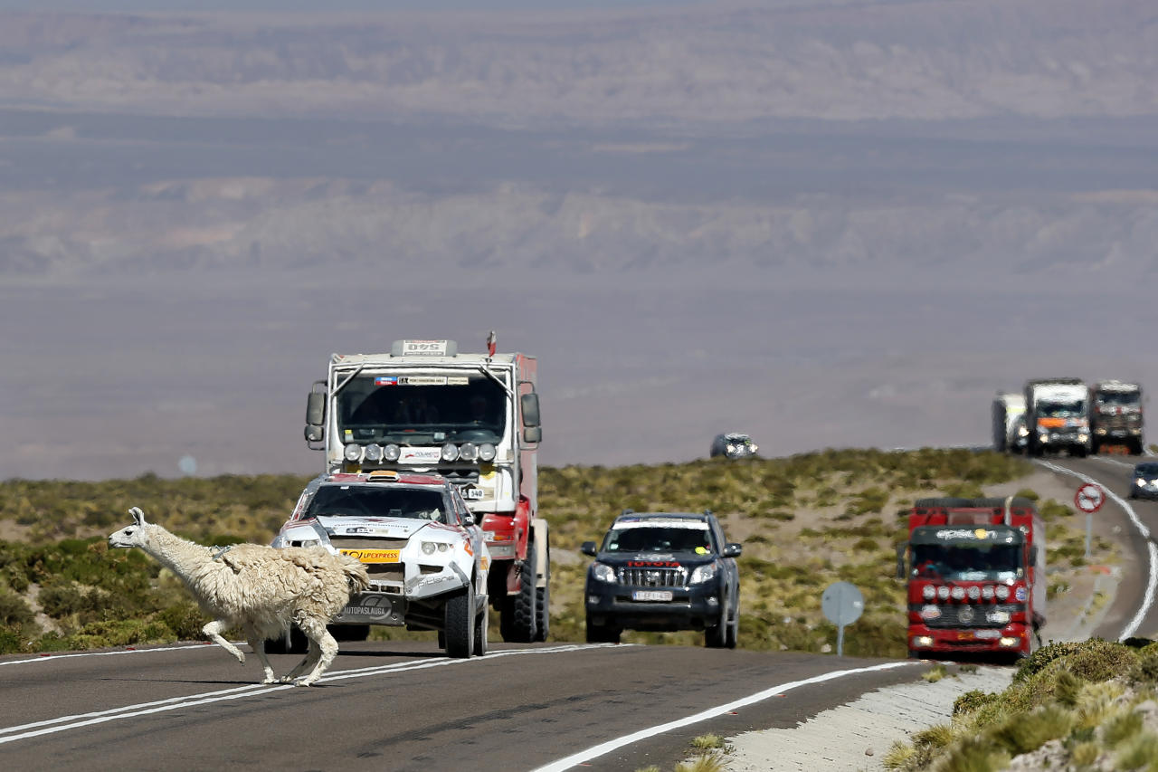An alpaca crosses the road as drivers wait in their vehicles on the highlands of Chile en route to the Jama border crossing during the untimed 7th stage of the 2013 Dakar Rally from Calama to Salta, January 11, 2013. REUTERS/Ivan Alvarado (CHILE - Tags: SPORT MOTORSPORT ANIMALS)