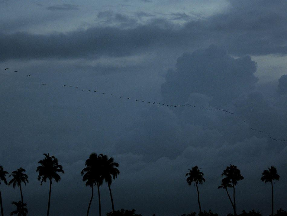 The next morning, we rose early and watched the magical sunrise. Even before sunup, hundreds of birds made their way for an early breakfast, cutting through the sky in distinct flight patterns. Not surprisingly, Alappuzha is a paradise for birds and birdwatchers.