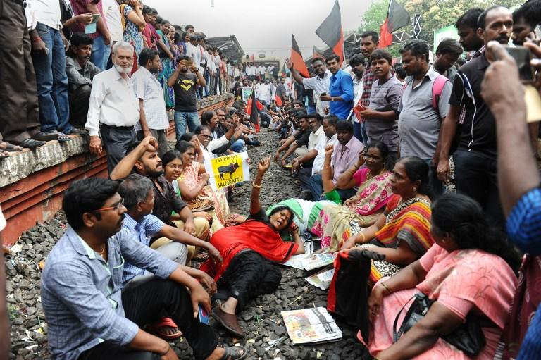 <p>Members of Dravida Munnetra Kazhagham (DMK) sit on the railway tracks during a demonstration against the ban on the Jallikattu bull taming ritual and call for a ban on animal rights orgnisation PETA, in Chennai on January 20, 2017 Prime Minister Narendra Modi refused January 19, to overturn a Supreme Court ban on a festival featuring young men wrestling with bulls that has brought thousands onto the streets of southern India to protest. Residents of the southern state of Tamil Nadu say the Jallikattu festival is a crucial part of their culture and are demanding the ban be lifted. / AFP PHOTO </p>