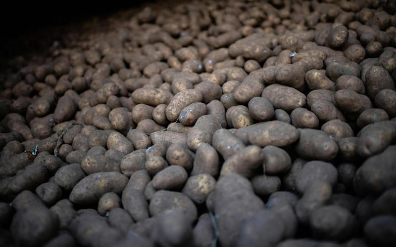 We are facing another potato shortage - AFP