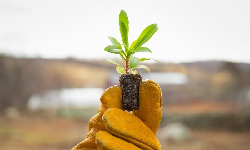 A gloved hand holding a small new seedling with two sets of green leaves