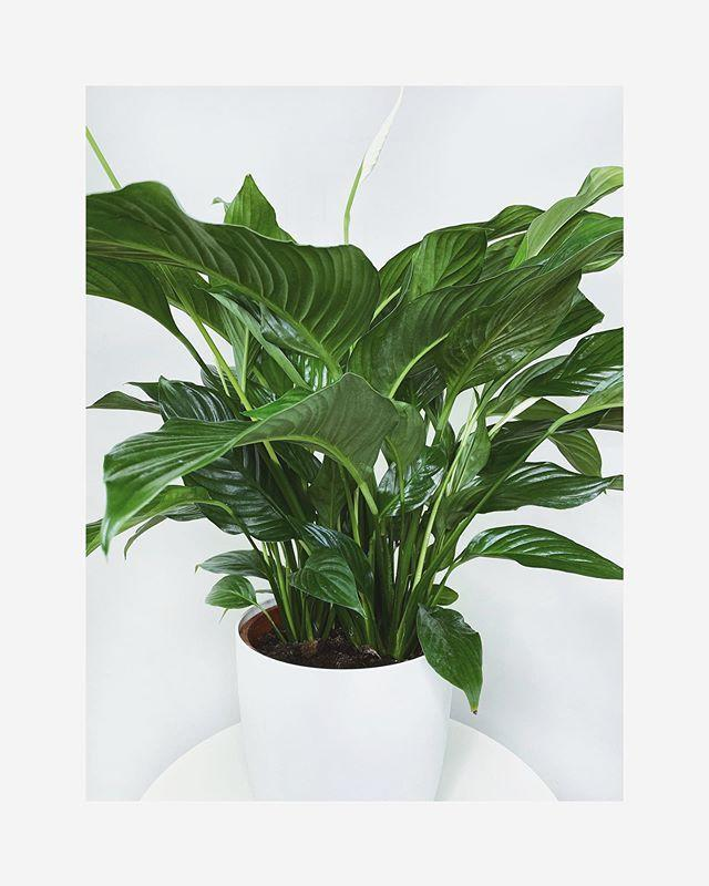 "<p><strong><a href=""https://www.houseofkato.com/"" rel=""nofollow noopener"" target=""_blank"" data-ylk=""slk:House of Kato"" class=""link rapid-noclick-resp"">House of Kato</a></strong> is an online houseplant business run by Haula and Daniel, a London based couple of Ugandan and British heritage. They aim to promote a connection with nature within urban homes. You can buy a range of houseplants, vases, pots and stands. </p><p><a href=""https://www.instagram.com/p/CBIT5_fn-Gi/"" rel=""nofollow noopener"" target=""_blank"" data-ylk=""slk:See the original post on Instagram"" class=""link rapid-noclick-resp"">See the original post on Instagram</a></p>"