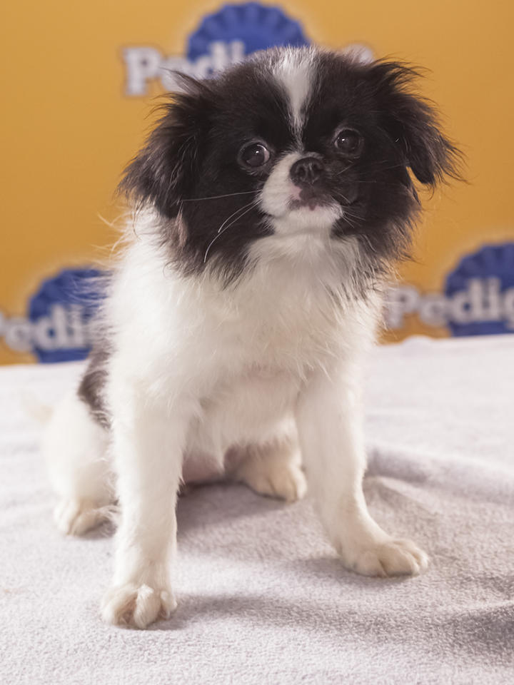Name: Nala