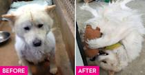 """<p>This little guy's original owners left him behind when they moved away and he spent five days on his own before neighbors brought him to <a href=""""http://www.halfwaythererescue.com/"""" rel=""""nofollow noopener"""" target=""""_blank"""" data-ylk=""""slk:Halfway There"""" class=""""link rapid-noclick-resp"""">Halfway There</a>. He bounced between foster homes and a boarding facility while battling various health conditions before his forever family turned his life around. Now he loves going to dog meet-ups and partying at dog-friendly bars with his owner.</p>"""