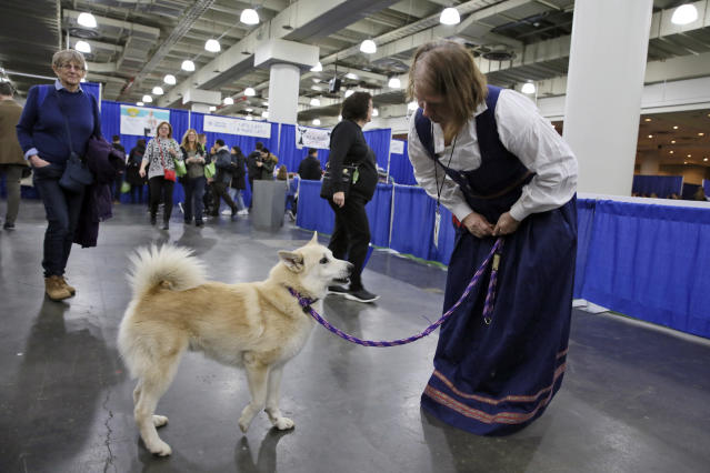 In this Saturday, Jan. 25, 2020 photo, Ghost, a Norwegian buhund, and his Patricia owner Faye Adcox greet visitors at the American Kennel Clubs Meet the Breeds event in New York. Ghost is competing at the Westminster Kennel Club dog show, but hes also a therapy dog that makes weekly rounds to see patients, staffers and visitors at a Delaware hospital, and he visits schools to serve as a nonjudgmental listener for children learning to read. (AP Photo/Jennifer Peltz)