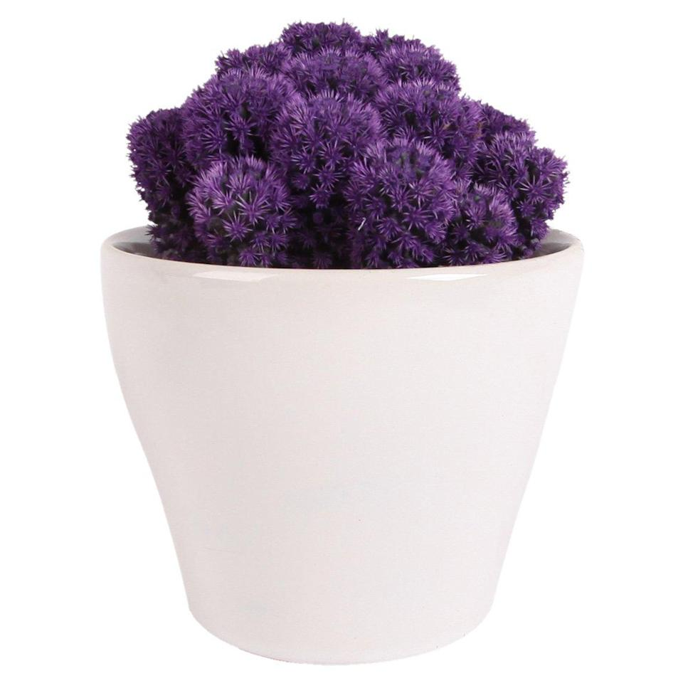 """<h3>Desert Gems Purple Cacti</h3><br>Costa Farms has a special process for adding the color to Desert Gems (it's not spray painted and it's not done with genetic engineering). This little cacti is perfectly happy inside and will bring a boost of color to mom's space. Plus, each one is shipped in a gloss white ceramic pot.<br><br><strong>Rating: </strong>4.1 out of 5 stars, and 26 reviews<br><br><strong>A Satisfied Customer Review: </strong>""""I love this vendor!!! They have outstanding plants and know how to properly prepare them for shipping which is not common! Literally gasped opening up a cactus I ordered after gifting my previous one with orange flowers to my daughter. I was missing it and had never imagined a cactus so beautiful until this purple beauty arrived!!!""""<br><br><strong>Costa Farms</strong> Premium Live Indoor Desert Cacti, $, available at <a href=""""https://www.amazon.com/Costa-Farms-Indoor-Desert-Decorator-Excellent/dp/B07BC2TPKC/ref=sr_1_8?"""" rel=""""nofollow noopener"""" target=""""_blank"""" data-ylk=""""slk:Amazon"""" class=""""link rapid-noclick-resp"""">Amazon</a>"""