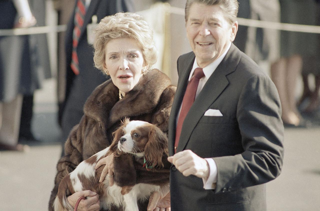 First Lady Nancy Reagan cradles an early Christmas present, a King Charles spaniel, as she and President Reagan stroll along the South Lawn of the White House in Washington on Friday, Dec. 6, 1985 after returning from New York. The new dog, a brother of a dog owned by National Review editor William Buckley Jr., is described as ?housebroken and extremely well-mannered.? (AP Photo/Dennis Cook)