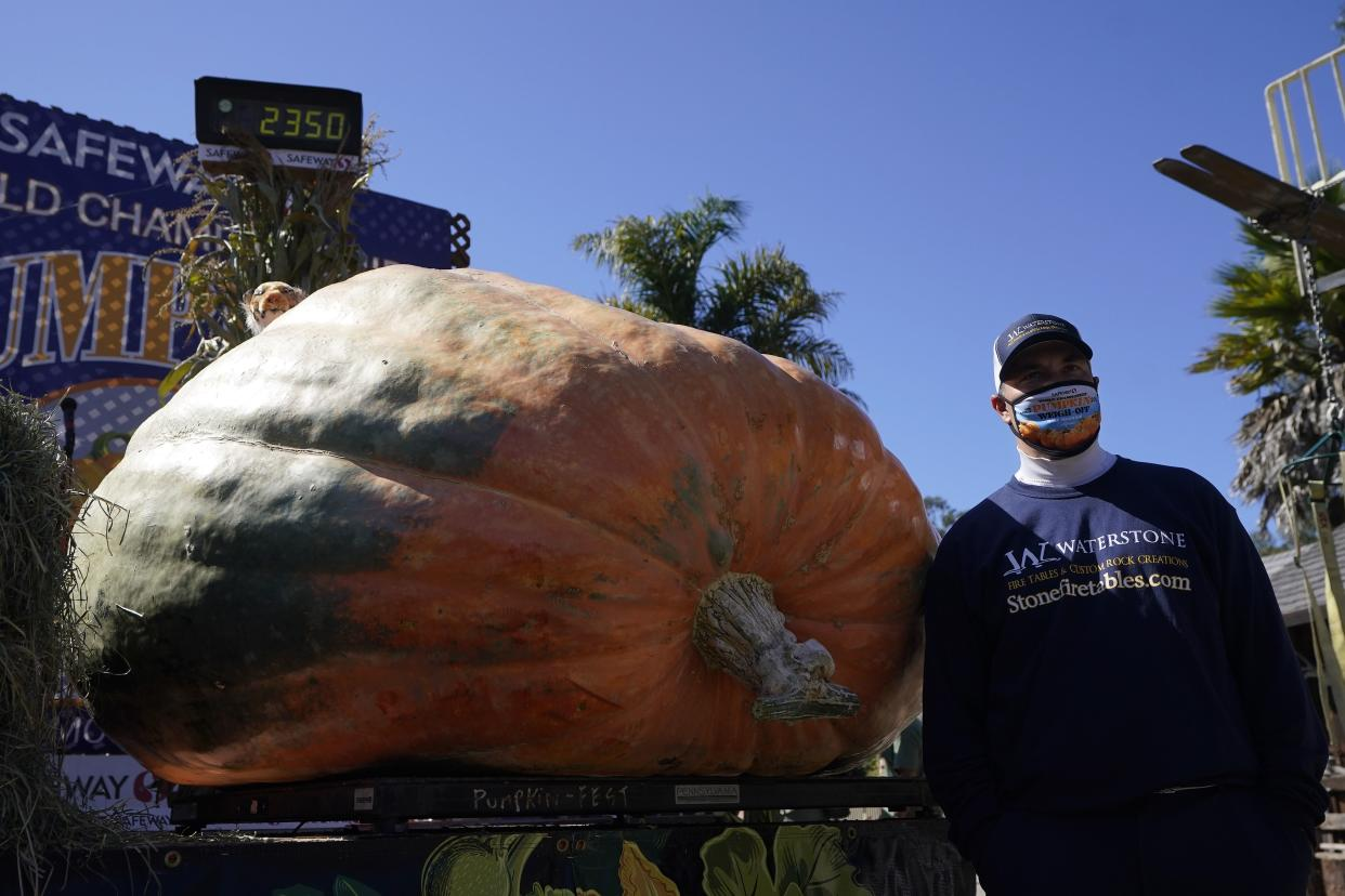 Travis Gienger, from Anoka, Minn., poses next to his pumpkin, which weighed in at 2350 pounds, to win the Safeway World Championship Pumpkin Weigh-Off in Half Moon Bay, Calif., Monday, Oct. 12, 2020.