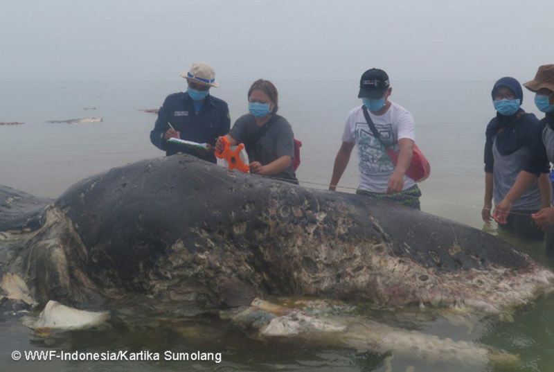 Dead Whale Found With Six Kilograms Of Plastic In Its Stomach
