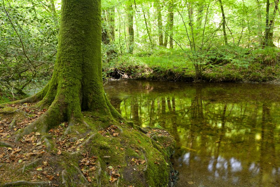 Trees beside the River Lyd in Devon
