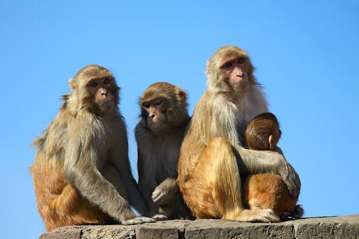 "<span class=""caption"">Keep your friends close and your enemies closer.</span> <span class=""attribution""><a class=""link rapid-noclick-resp"" href=""https://www.shutterstock.com/image-photo/monkey-family-on-blue-sky-background-551178088"" rel=""nofollow noopener"" target=""_blank"" data-ylk=""slk:Shutterstock/Maksym Gorpenyuk"">Shutterstock/Maksym Gorpenyuk</a></span>"