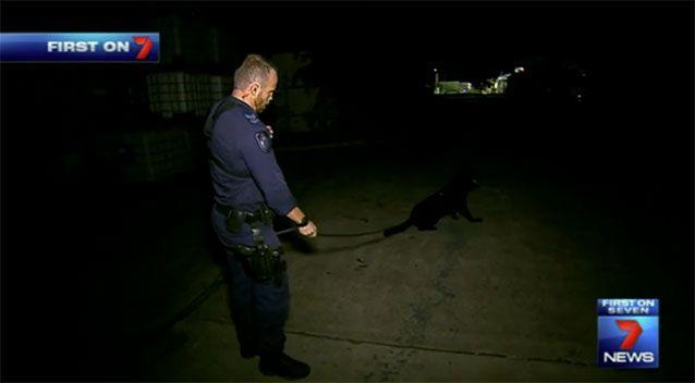 A look at the Brisbane dog squad at work, in the dark where they really come into their own. Source: 7 News