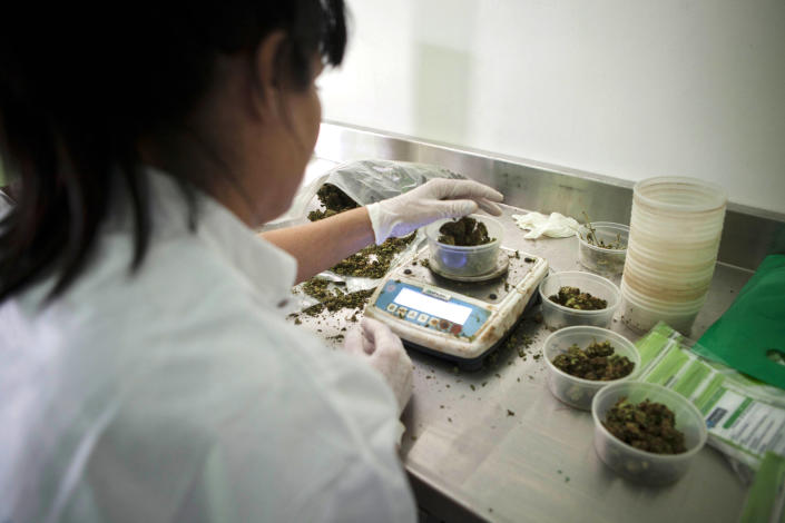 In this photograph made on Thursday, Nov. 1, 2012, Israeli woman works at Tikkun Olam medical cannabis farm, near the northern Israeli city of Safed, Israel. Marijuana is illegal in Israel but medical use has been permitted since the early nineties for cancer patients and those with pain-related illnesses such as Parkinson's, Multiple Sclerosis, and even post-traumatic stress disorder. (AP Photo/Dan Balilty)