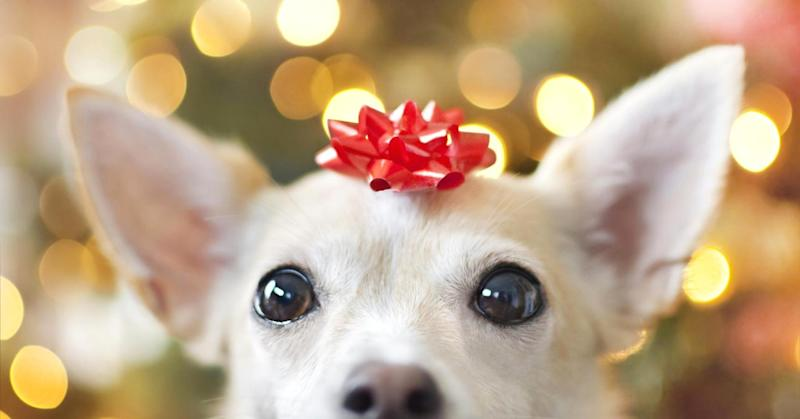 10 must-have gifts for your pets this holiday season