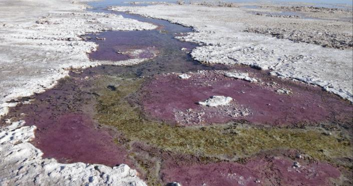 """<span class=""""caption"""">Purple microbial mats offer clues to how ancient life functioned. </span> <span class=""""attribution""""><a class=""""link rapid-noclick-resp"""" href=""""https://marinesciences.uconn.edu/person/pieter-visscher/"""" rel=""""nofollow noopener"""" target=""""_blank"""" data-ylk=""""slk:Pieter Visscher"""">Pieter Visscher</a>, <a class=""""link rapid-noclick-resp"""" href=""""http://creativecommons.org/licenses/by-nd/4.0/"""" rel=""""nofollow noopener"""" target=""""_blank"""" data-ylk=""""slk:CC BY-ND"""">CC BY-ND</a></span>"""