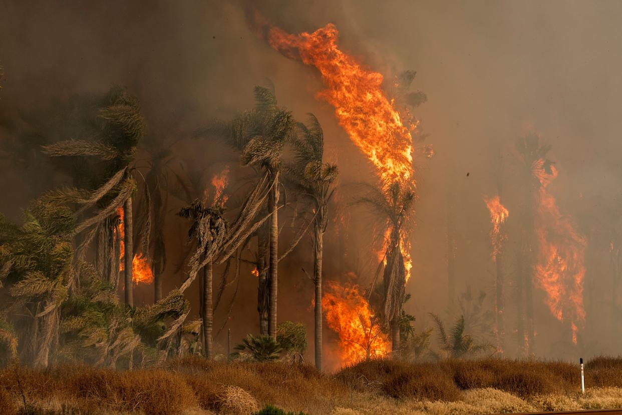 Palm trees explode into flames as the Thomas wildfire rages in Ventura, California, on Dec. 7. (Photo: Ronen Tivony/NurPhoto via Getty Images)
