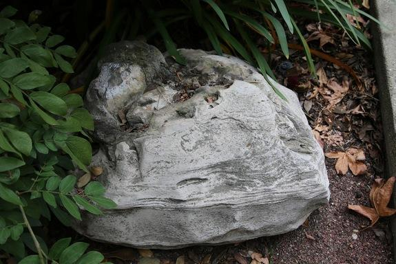 The boulder containing a whale skull thought to belong to a new species.