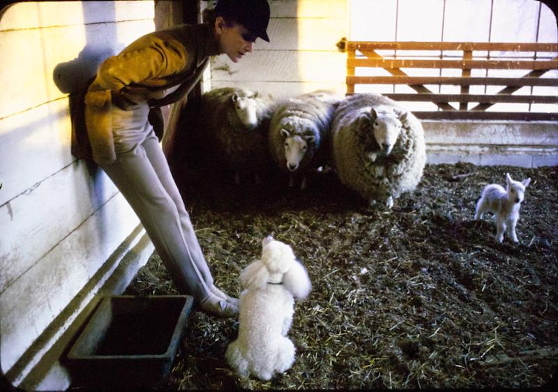 """From a 1963 Vogue photo essay, """"Irving Penn's Love Letter to a Farm,"""" Lisa Fonssagrives and Fido with the sheep."""