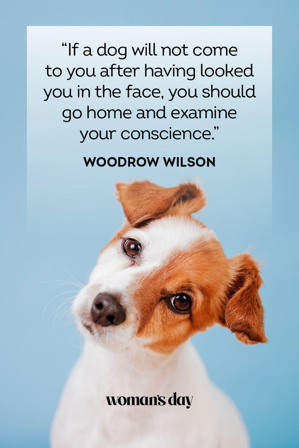 """<p>""""If a dog will not come to you after having looked you in the face, you should go home and examine your conscience.""""</p>"""