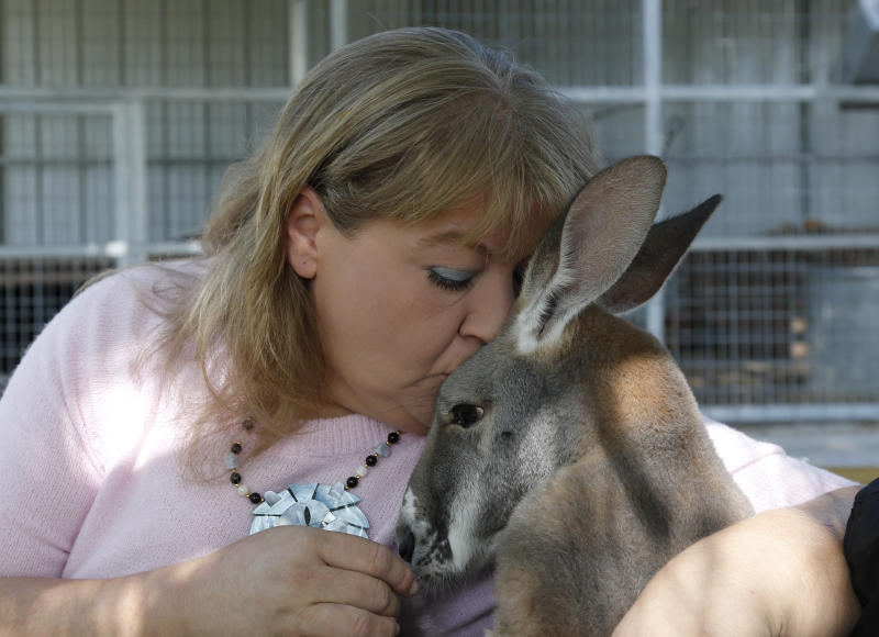 Christie Carr kisses Irwin the kangaroo at the Garold Wayne Interactive Zoological Park, where they now live, in Wynnewood, Okla. on Wednesday, Aug. 28, 2013. Carr's therapist has certified Irwin as a therapy pet under the Americans with Disabilities Act. (AP Photo/Sue Ogrocki)