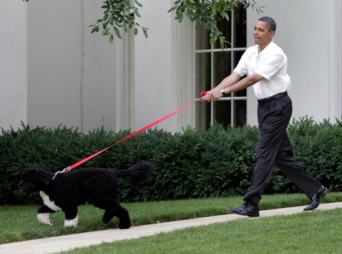 Former president Barack Obama, depicted in 2010, announced that the family dog Bo died on May 8, 2021.(Photo: YURI GRIPAS/AFP via Getty Images)