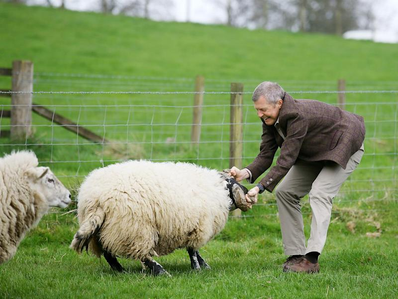 The politician takes the ram by the horns as he campaigns in the Scottish local elections (Andrew Milligan/PA Wire)