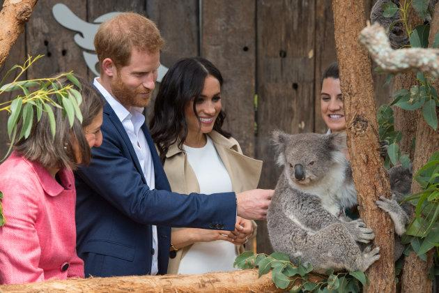 The duke and duchess are introduced to a koala at Taronga Zoo.