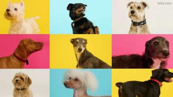 PHOTO: The track – Raise the Woof! - was released on Nov. 18, 2020 and created based on scientific research and input from vets & animal behaviorists to make dogs feel happy and content, according to Tails.com.  (YouTube/Tails.com)