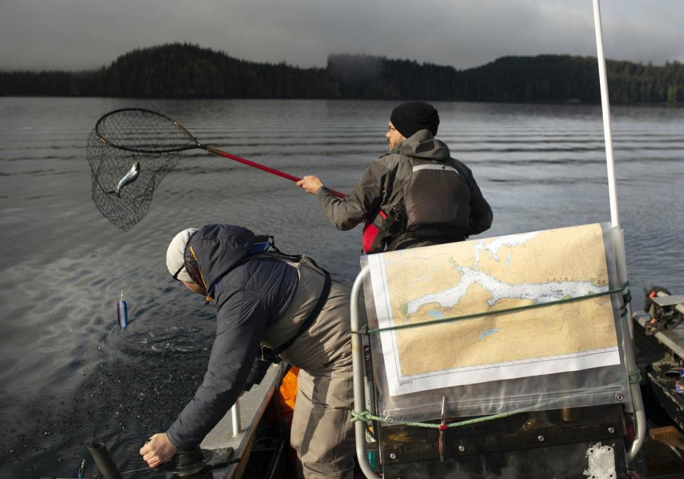 """<span class=""""caption"""">Scientists have been trying to pinpoint the exact causes of the declines in some wild Pacific salmon populations for decades. </span> <span class=""""attribution""""><span class=""""source"""">(Amy Romer)</span>, <span class=""""license"""">Author provided</span></span>"""