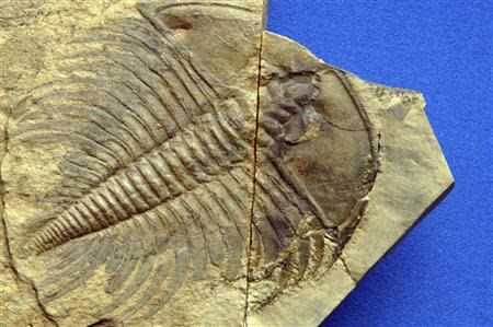 Handout photo of a fossil of a trilobite