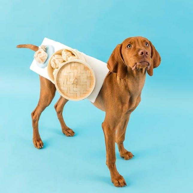 3466f158dd 81 of the Best Dog Halloween Costumes for Your Pooch