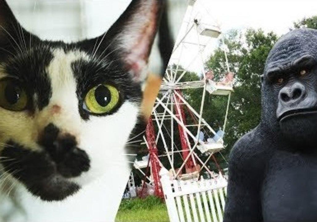 """<p>The Humane Society of the United States assisted in the rescue of over 50 dogs and over 30 cats in Jones County, Mississippi, from a carnival-like property.</p><p>The organization shared a video of one of the rescue cats on their YouTube page on July 19. The footage shows Alex, a cat who was found among """"rusted, old cages covered in cobwebs lined a dark room in the debilitating Mississippi heat.""""</p><p>According to a <a href=""""http://www.humanesociety.org/news/press_releases/2018/07/charges-mississippi-cruelty-situation-07-17-18.html"""" target=""""_blank"""">press release,</a> two suspects — <a href=""""http://www.wdam.com/story/38654614/two-charged-in-jones-county-animal-cruelty-case"""" target=""""_blank"""">Mary Ellen Senne and David Senne</a> — have been charged with aggravated animal cruelty.</p><p>In total, 89 animals were rescued from the property. As of writing, the footage has over 3,500 views on YouTube. Credit: Humane Society of the United States via Storyful</p>"""