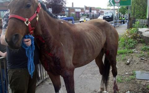 The injured animal has now been taken to stables to recuperate - Credit: RSPCA/PA