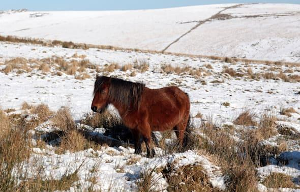 Snow Covers Dartmoor As The UK Braces Itself For More Cold Winter Weather