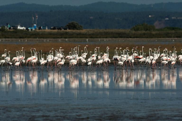 The use of lead shot in wetlands has been illegal in Greece since 2013, and the EU in November said it would ban its use in all wetlands