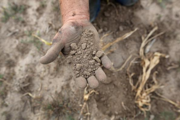 Darren Becker sifts through arid topsoil under a ruined crop on the family farm on August 24, 2012 in Logan, Kansas. Like many Kansas farmers who's profits have been wiped out by the record drought, the Beckers are working hard to hang on to their farm, which has been in their family for five generations. Most of Kansas is still in extreme or exceptional drought, despite recent lower temperatures and thunderstorms, according to the University of Nebraska's Drought Monitor. The record-breaking drought, which has affected more than half of the continental United States, is expected to drive up food prices by 2013 due to lower crop harvests and the adverse effect on the nation's cattle industry. (Photo by John Moore/Getty Images)