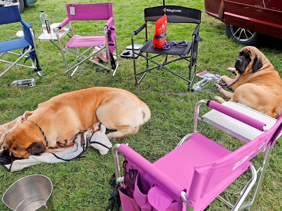 dogs lounging outside during westminster dog show