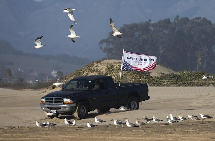 """A truck sporting a """"save our dunes"""" flag amid a flock of seagulls on the beach"""